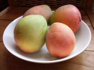 Fresh Taboga Mangos, right off the tree...