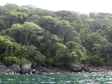 Snorkeling by Panga, Playa Hobo Taboga Panama